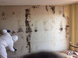 Mold-cleanup-toronto-705x527.jpeg