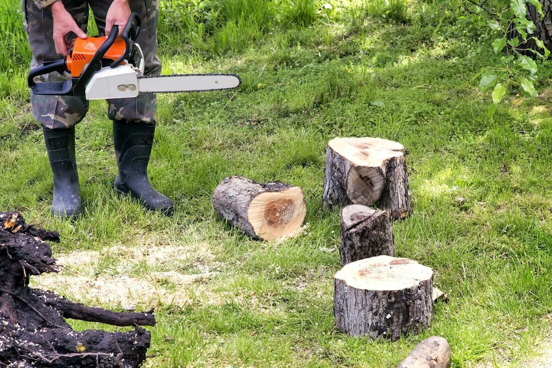 pueblo-tree-service-tree-removal-2_orig.jpg