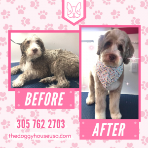 mobile pet grooming in miami -2.png