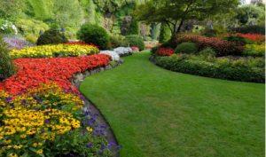 Garden Landscaping in Campbelltown.jpg