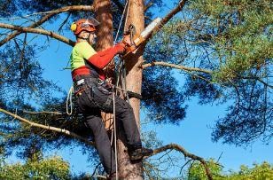 Campbelltown Tree Service.JPG
