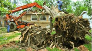 Tree removal in Campbelltown.JPG