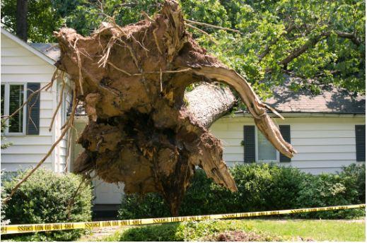 Emergency Tree Removal in Campbelltown.JPG