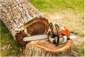 Residential & Commercial Tree Service in Campbelltown.JPG