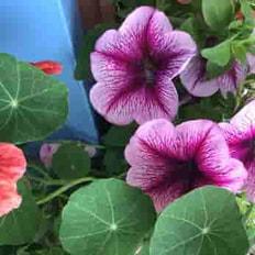 flower-2-rs.jpg