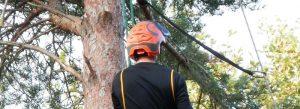 Tree-Trimming-Holgate.jpg