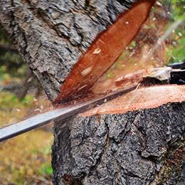 0-LOGO-cut-of-tree-in-pembroke-pines_2.jpg