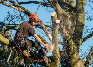 tree-cutting-services_1.jpg
